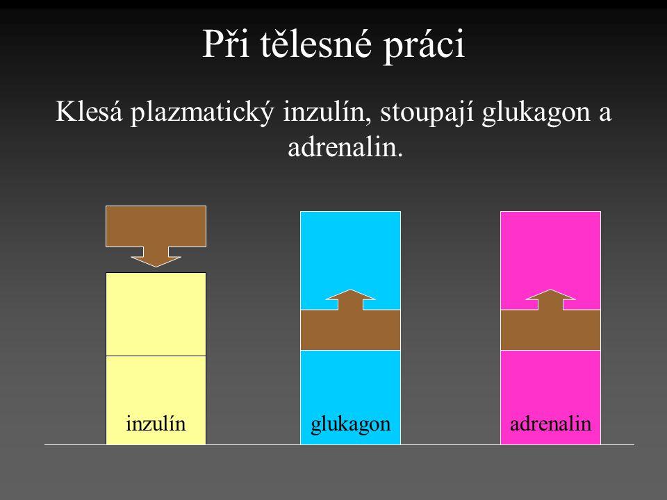 Při tělesné práci Klesá plazmatický inzulín, stoupají glukagon a adrenalin. inzulínglukagonadrenalin