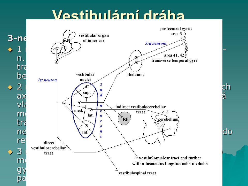 Vestibulární dráha 3-neuronová zkřížená dráha  1 neuron: bipolární buňky v ganglion vestibulare - n. vestibularis - n.. VIII (některá vlákna tvoří tr