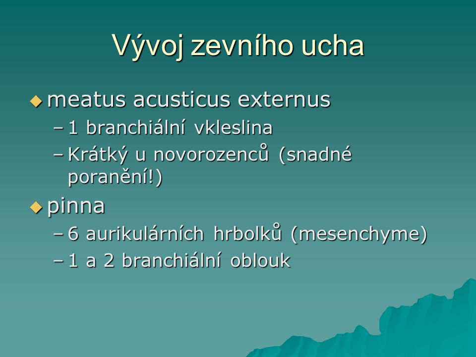 Vývoj zevního ucha  meatus acusticus externus –1 branchiální vkleslina –Krátký u novorozenců (snadné poranění!)  pinna –6 aurikulárních hrbolků (mes