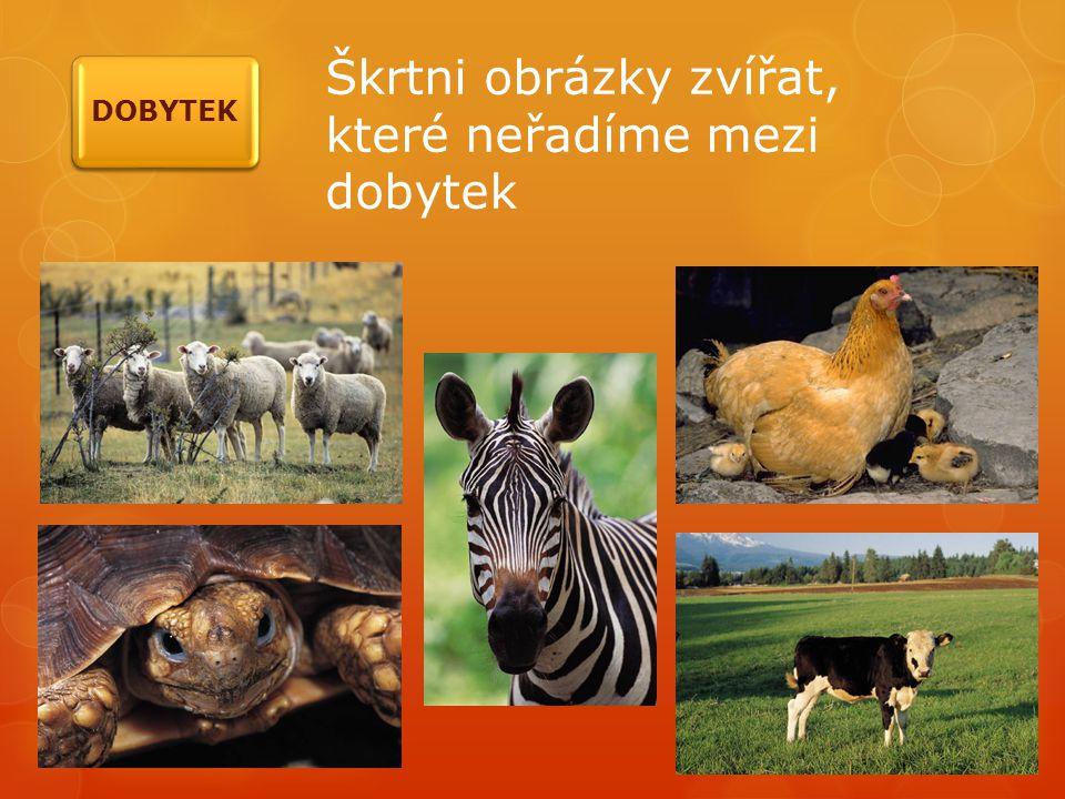 Škrtni obrázky zvířat, které neřadíme mezi dobytek DOBYTEK