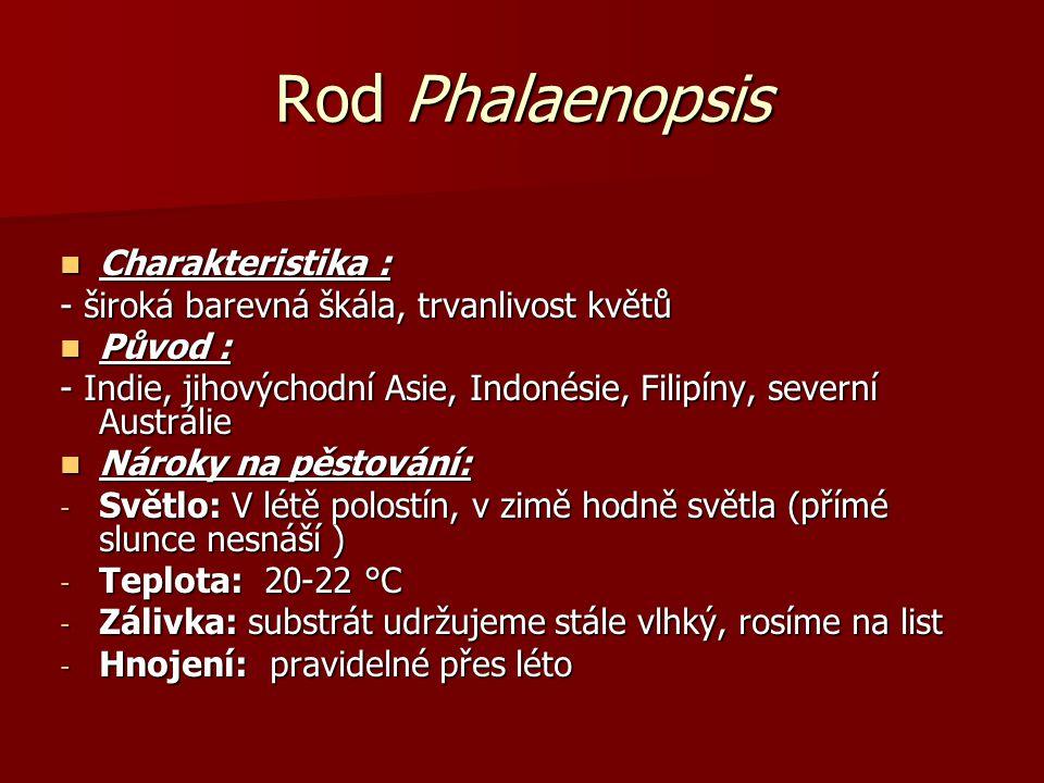 Rod Phalaenopsis Charakteristika : Charakteristika : - široká barevná škála, trvanlivost květů Původ : Původ : - Indie, jihovýchodní Asie, Indonésie,