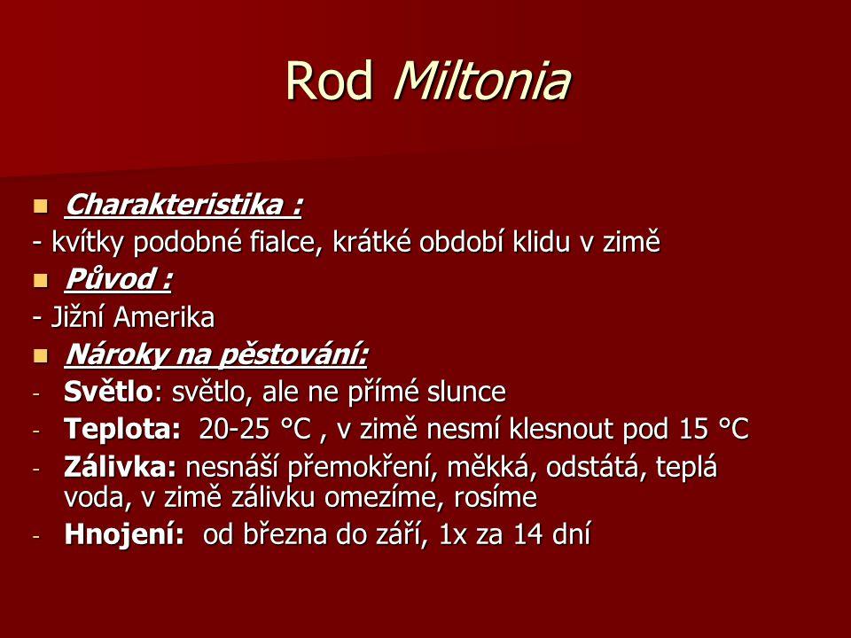 Rod Miltonia Charakteristika : Charakteristika : - kvítky podobné fialce, krátké období klidu v zimě Původ : Původ : - Jižní Amerika Nároky na pěstová