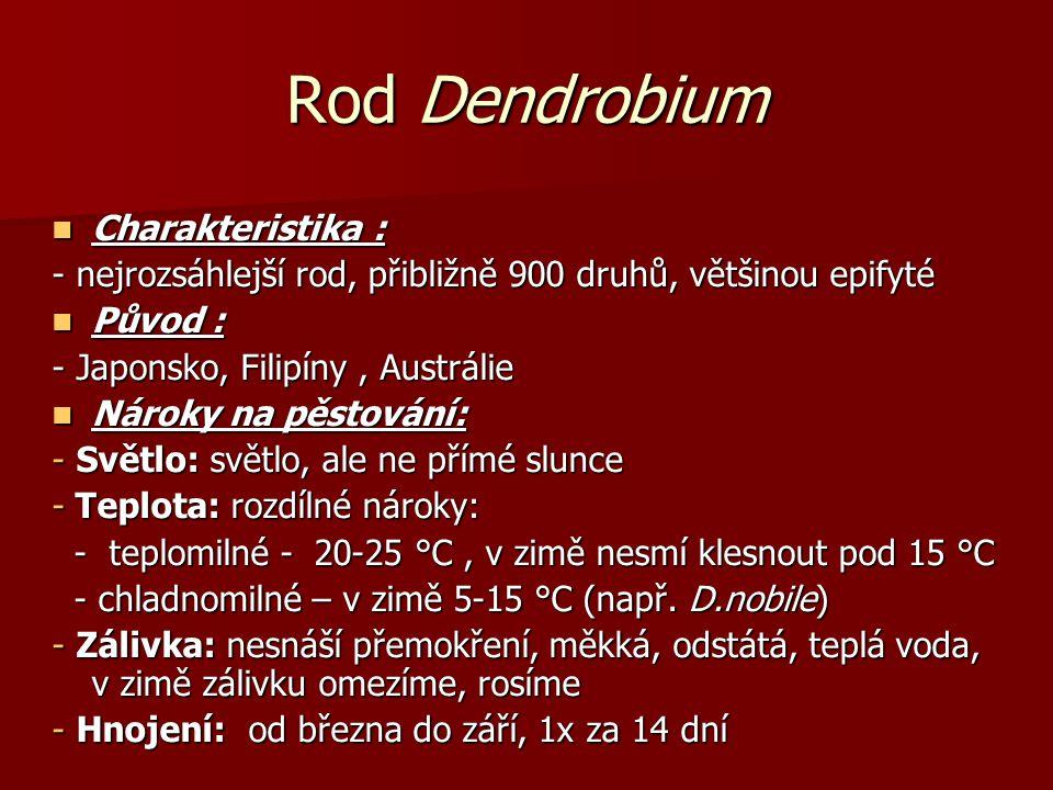 Rod Dendrobium Charakteristika : Charakteristika : - nejrozsáhlejší rod, přibližně 900 druhů, většinou epifyté Původ : Původ : - Japonsko, Filipíny, A