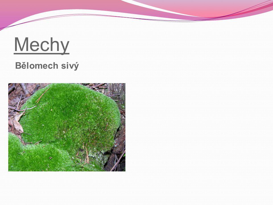 Mechy Rašeliník ostrolistý – odspodu odumírá, nahoře přirůstá, ve velké hloubce se mění v rašelinu Ploník obecný