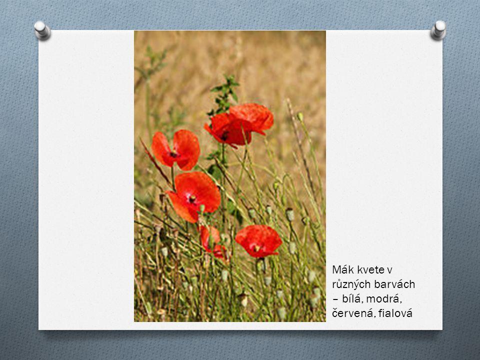 Mák kvete v různých barvách – bílá, modrá, červená, fialová