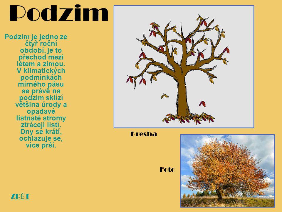 Podzim Podzim je jedno ze čtyř roční období, je to přechod mezi létem a zimou. V klimatických podmínkách mírného pásu se právě na podzim sklízí většin