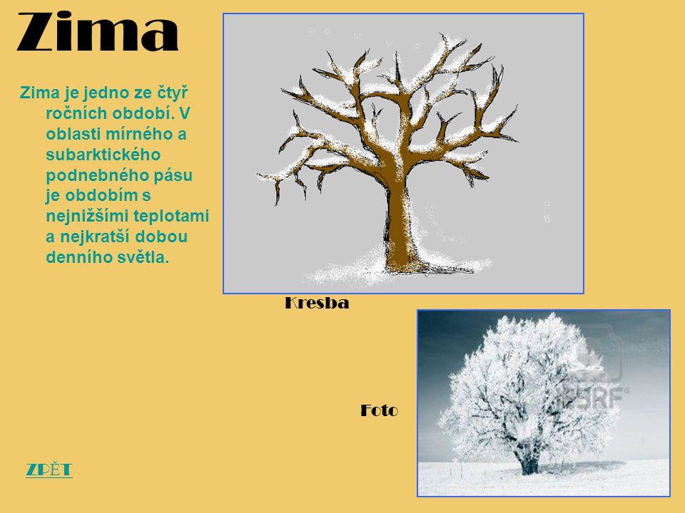 Zima Zima je jedno ze čtyř ročních období. V oblasti mírného a subarktického podnebného pásu je obdobím s nejnižšími teplotami a nejkratší dobou denní