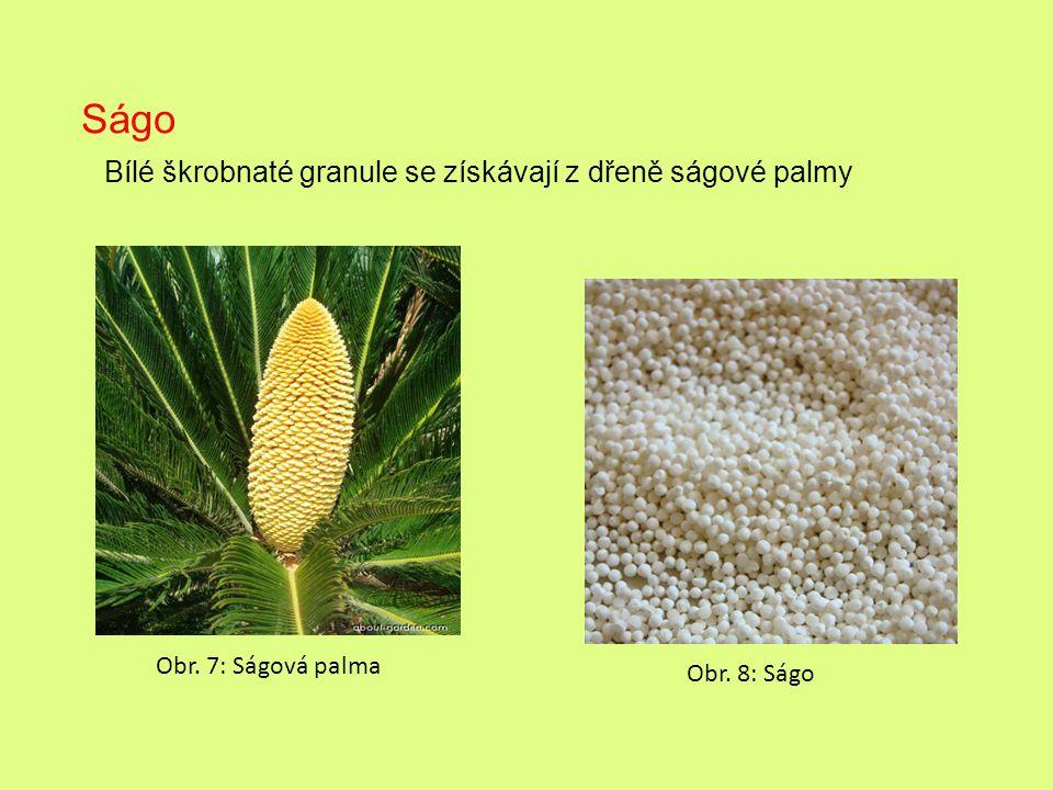 Obr. 7: Ságová palma Obr. 8: Ságo Ságo Bílé škrobnaté granule se získávají z dřeně ságové palmy