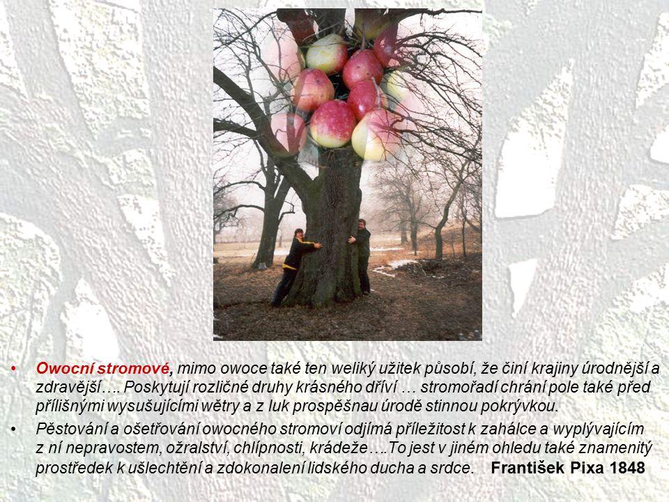 Owocní stromové, mimo owoce také ten weliký užitek působí, že činí krajiny úrodnější a zdravější…. Poskytují rozličné druhy krásného dříví … stromořad