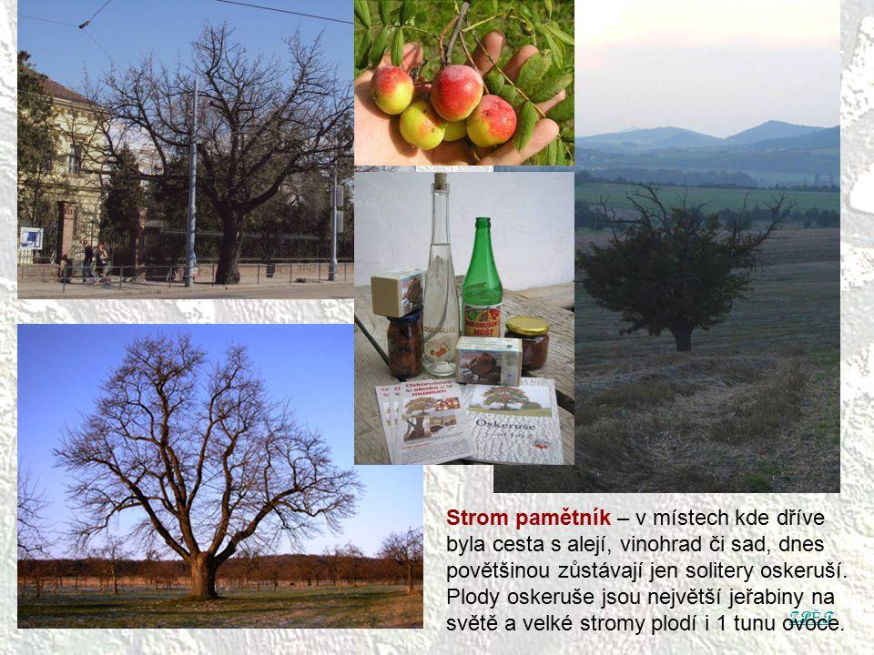 ZP Ě T Strom pamětník – v místech kde dříve byla cesta s alejí, vinohrad či sad, dnes povětšinou zůstávají jen solitery oskeruší. Plody oskeruše jsou