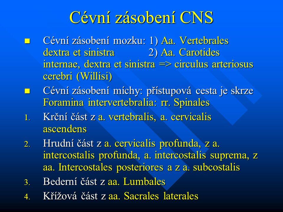 Cévní zásobení CNS Cévní zásobení mozku: 1) Aa. Vertebrales dextra et sinistra 2) Aa. Carotides internae, dextra et sinistra => circulus arteriosus ce