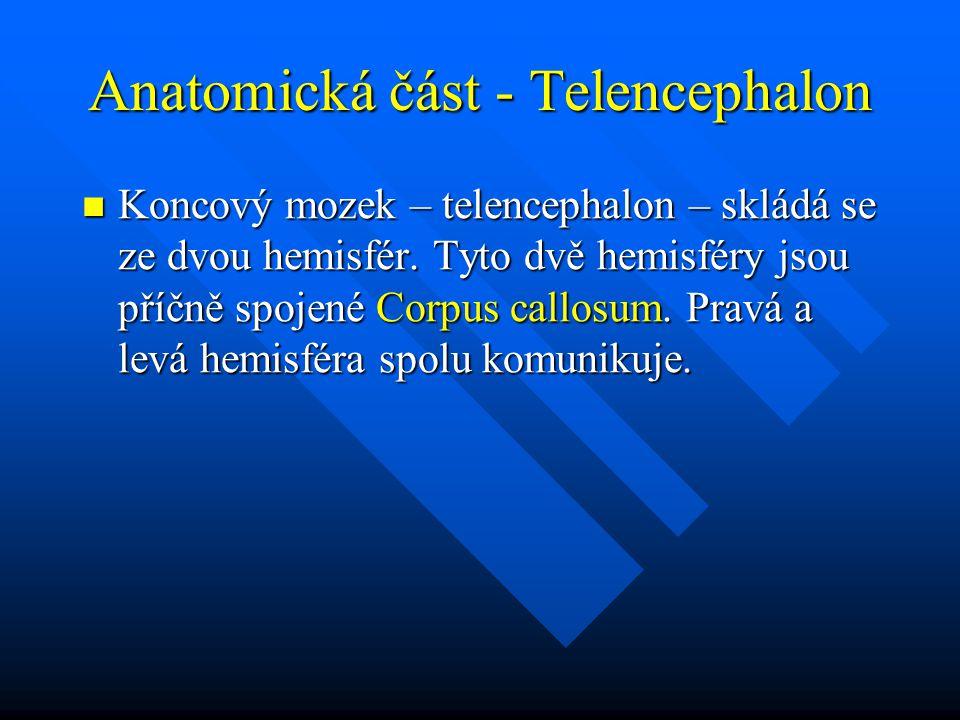 Anatomická část - Telencephalon Koncový mozek – telencephalon – skládá se ze dvou hemisfér. Tyto dvě hemisféry jsou příčně spojené Corpus callosum. Pr