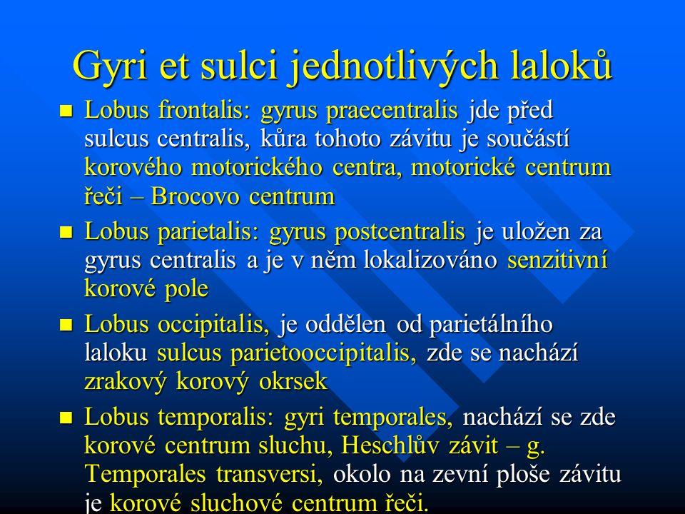Gyri et sulci jednotlivých laloků Lobus frontalis: gyrus praecentralis jde před sulcus centralis, kůra tohoto závitu je součástí korového motorického