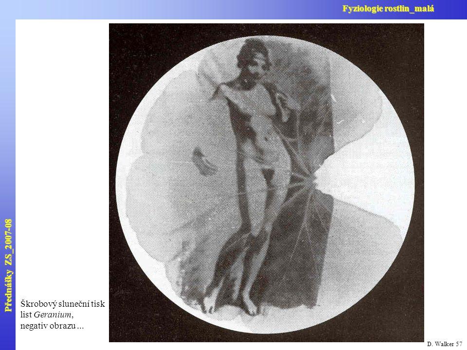 D. Walker 57 Škrobový sluneční tisk list Geranium, negativ obrazu... Přednášky ZS_2007-08 Fyziologie rostlin_malá
