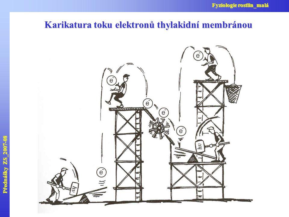 Karikatura toku elektronů thylakidní membránou Přednášky ZS_2007-08 Fyziologie rostlin_malá