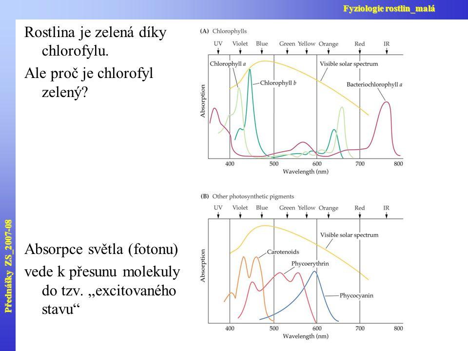 """Rostlina je zelená díky chlorofylu. Ale proč je chlorofyl zelený? Absorpce světla (fotonu) vede k přesunu molekuly do tzv. """"excitovaného stavu"""" Předná"""