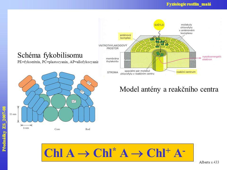Chl A  Chl * A  Chl + A - Alberts s.433 Schéma fykobilisomu PE=fykoeritrin, PC=plastocyanin, AP=allofykocyanin Model antény a reakčního centra Předn