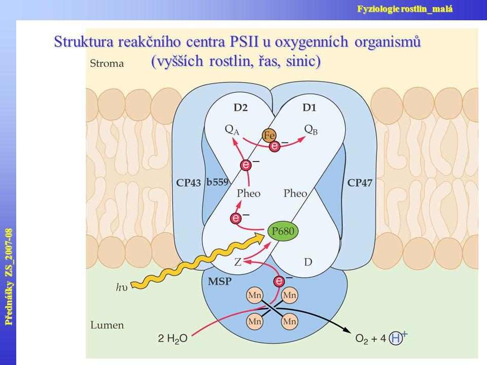 Struktura reakčního centra PSII u oxygenních organismů (vyšších rostlin, řas, sinic) Přednášky ZS_2007-08 Fyziologie rostlin_malá
