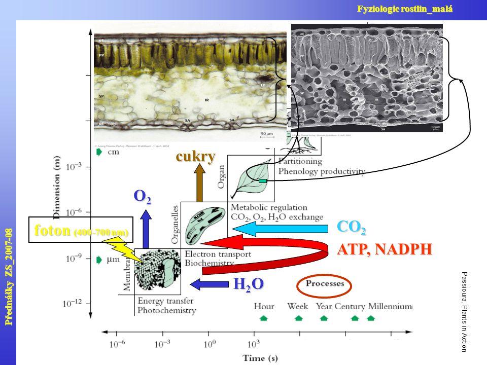 Passioura, Plants in Action H2OH2OH2OH2O O2O2O2O2 ATP, NADPH CO 2 cukry foton (400-700 nm) Přednášky ZS_2007-08 Fyziologie rostlin_malá