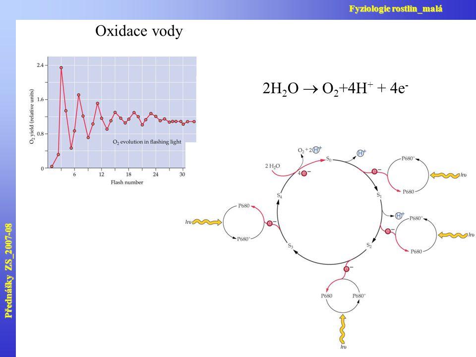 Oxidace vody 2H 2 O  O 2 +4H + + 4e - Přednášky ZS_2007-08 Fyziologie rostlin_malá