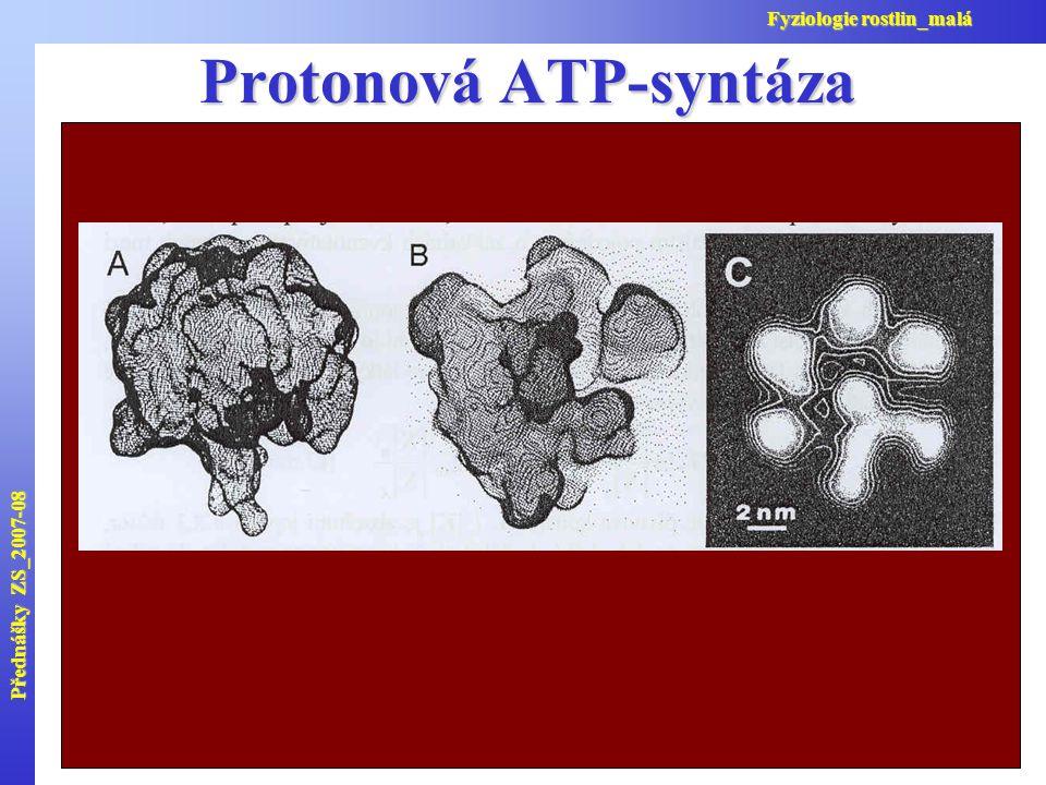 Protonová ATP-syntáza Přednášky ZS_2007-08 Fyziologie rostlin_malá