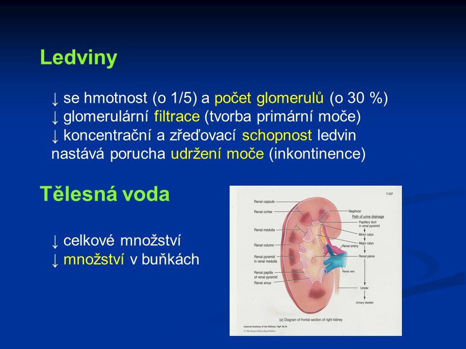 Ledviny ↓ se hmotnost (o 1/5) a počet glomerulů (o 30 %) ↓ glomerulární filtrace (tvorba primární moče) ↓ koncentrační a zřeďovací schopnost ledvin na