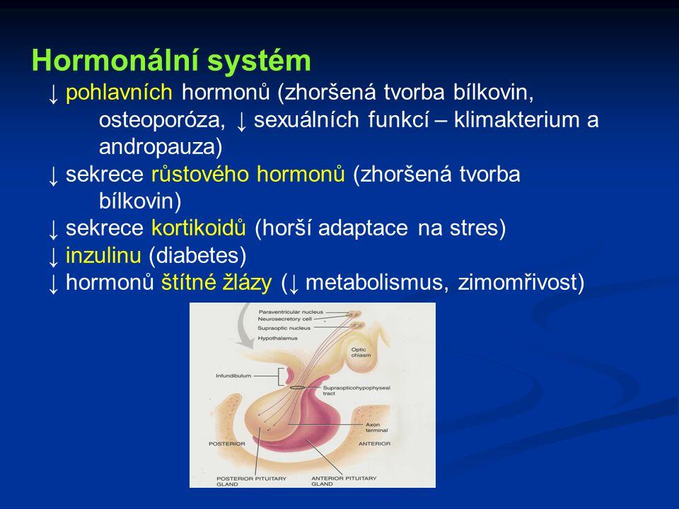 Hormonální systém ↓ pohlavních hormonů (zhoršená tvorba bílkovin, osteoporóza, ↓ sexuálních funkcí – klimakterium a andropauza) ↓ sekrece růstového ho