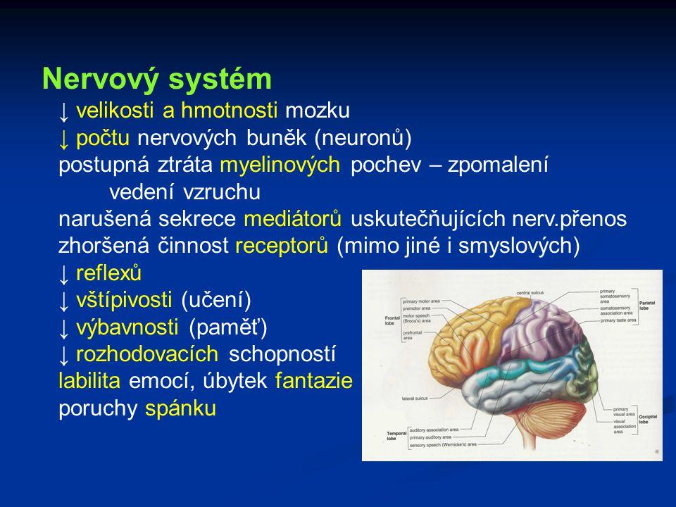 Nervový systém ↓ velikosti a hmotnosti mozku ↓ počtu nervových buněk (neuronů) postupná ztráta myelinových pochev – zpomalení vedení vzruchu narušená