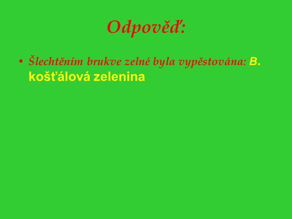 Odpověď: Šlechtěním brukve zelné byla vypěstována: B. košťálová zelenina