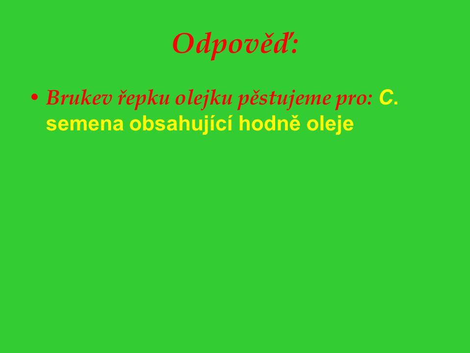Odpověď: Brukev řepku olejku pěstujeme pro: C. semena obsahující hodně oleje
