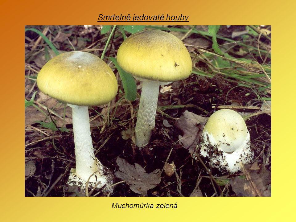 Smrtelně jedovaté houby Muchomůrka zelená