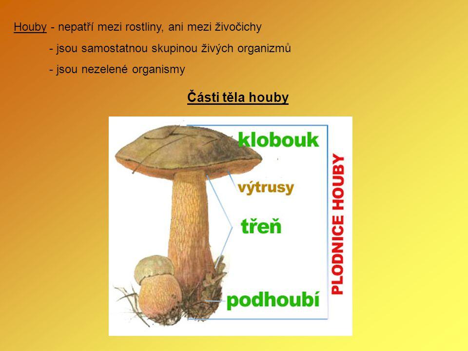 Houby - nepatří mezi rostliny, ani mezi živočichy - jsou samostatnou skupinou živých organizmů - jsou nezelené organismy Části těla houby