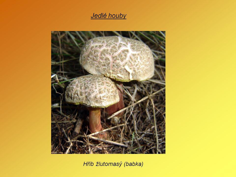 Zdroje - obrázky: www.biolib.cz www.google.cz