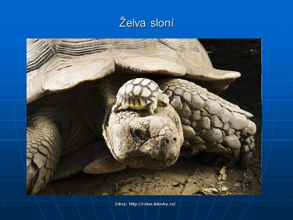 Želva sloní Zdroj: http://relax.lidovky.cz/