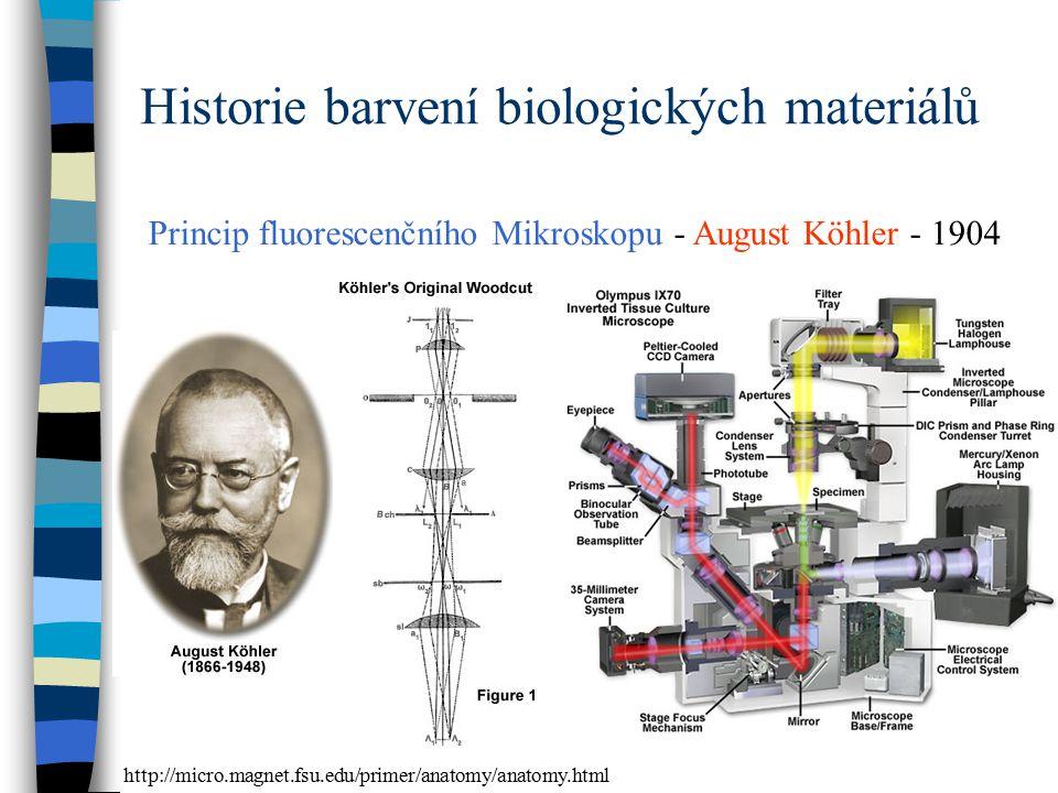 Princip fluorescenčního Mikroskopu - August Köhler - 1904 http://micro.magnet.fsu.edu/primer/anatomy/anatomy.html Historie barvení biologických materi