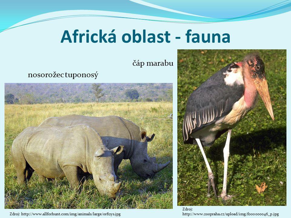 Africká oblast - fauna čáp marabu Zdroj: http://www.zoopraha.cz/upload/img/f000000046_p.jpg Zdroj: http://www.allforhunt.com/img/animals/large/or82ys.jpg Hrabáč nosorožec tuponosý