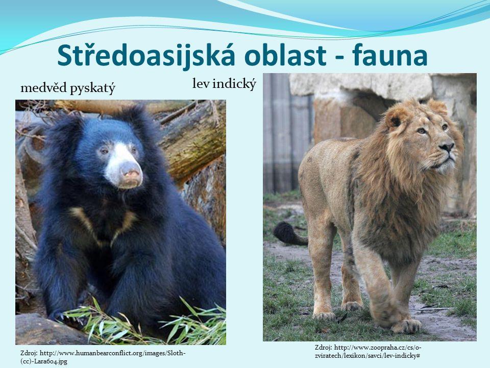Středoasijská oblast - fauna medvěd pyskatý Zdroj: http://www.humanbearconflict.org/images/Sloth- (cc)-Lara604.jpg lev indický Zdroj: http://www.zoopr