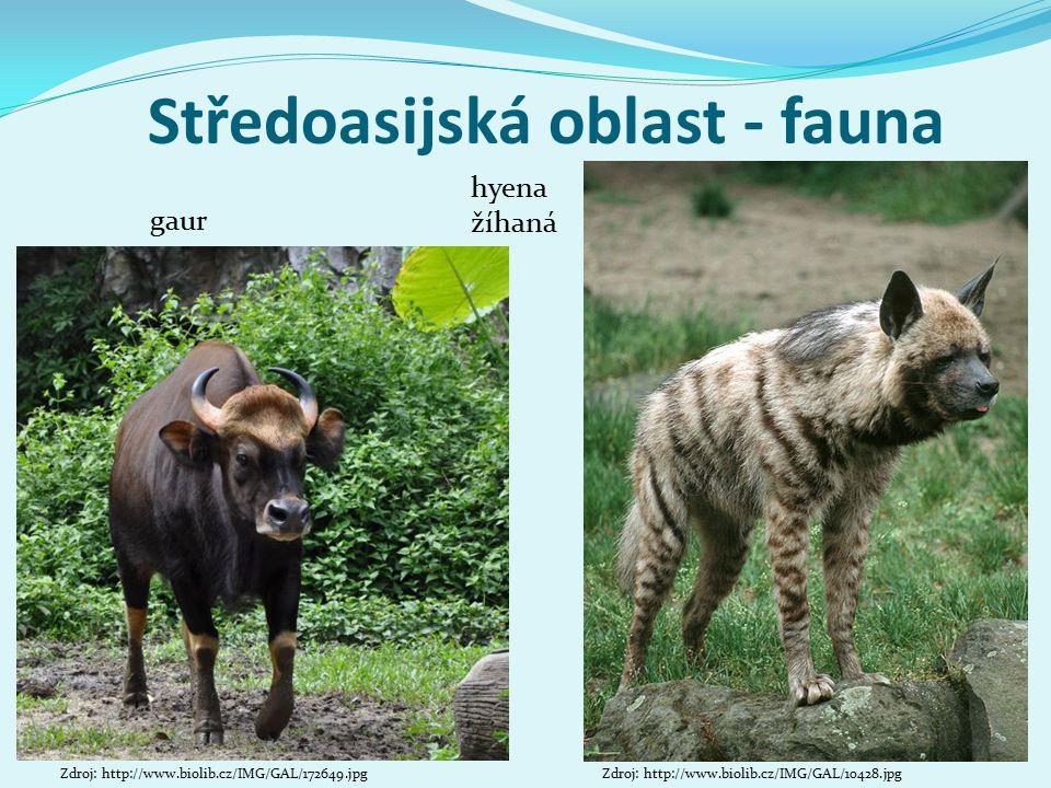Středoasijská oblast - fauna hyena žíhaná Zdroj: http://www.biolib.cz/IMG/GAL/10428.jpgZdroj: http://www.biolib.cz/IMG/GAL/172649.jpg gaur