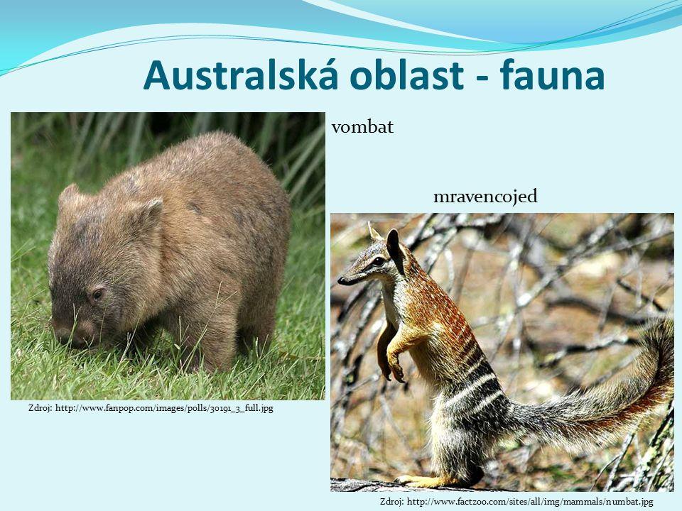 Australská oblast - fauna vombat Zdroj: http://www.fanpop.com/images/polls/30191_3_full.jpg mravencojed Zdroj: http://www.factzoo.com/sites/all/img/ma