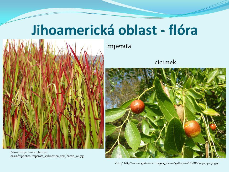 Jihoamerická oblast - flóra Zdroj: http://www.plantes- oasis.fr/photos/Imperata_cylindrica_red_baron_01.jpg Imperata cicimek Zdroj: http://www.garten.cz/images_forum/gallery/10667/8669-p1340171.jpg