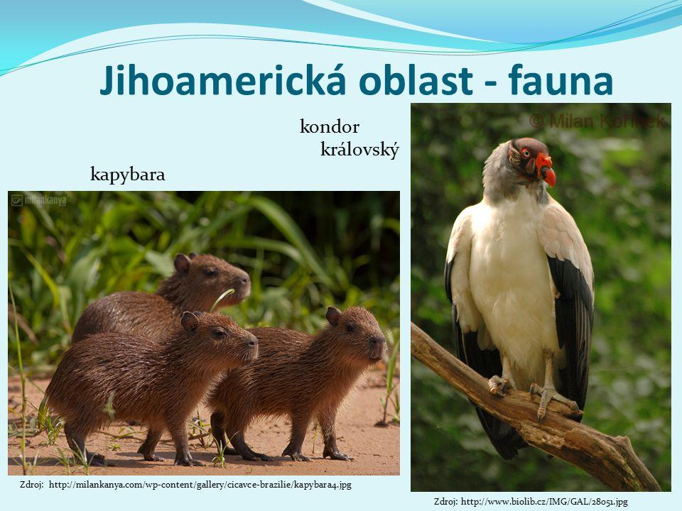 Jihoamerická oblast - fauna kondor královský Zdroj: http://milankanya.com/wp-content/gallery/cicavce-brazilie/kapybara4.jpg kapybara Zdroj: http://www.biolib.cz/IMG/GAL/28051.jpg