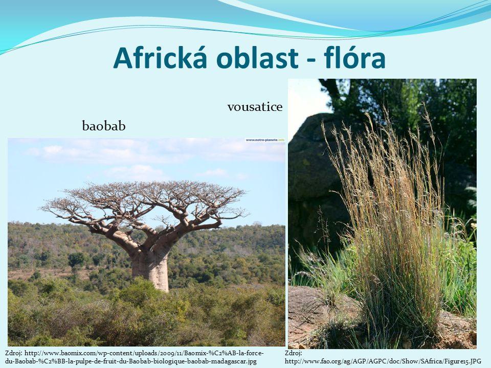 Africká oblast - flóra Zdroj: http://www.baomix.com/wp-content/uploads/2009/11/Baomix-%C2%AB-la-force- du-Baobab-%C2%BB-la-pulpe-de-fruit-du-Baobab-biologique-baobab-madagascar.jpg baobab vousatice Zdroj: http://www.fao.org/ag/AGP/AGPC/doc/Show/SAfrica/Figure15.JPG