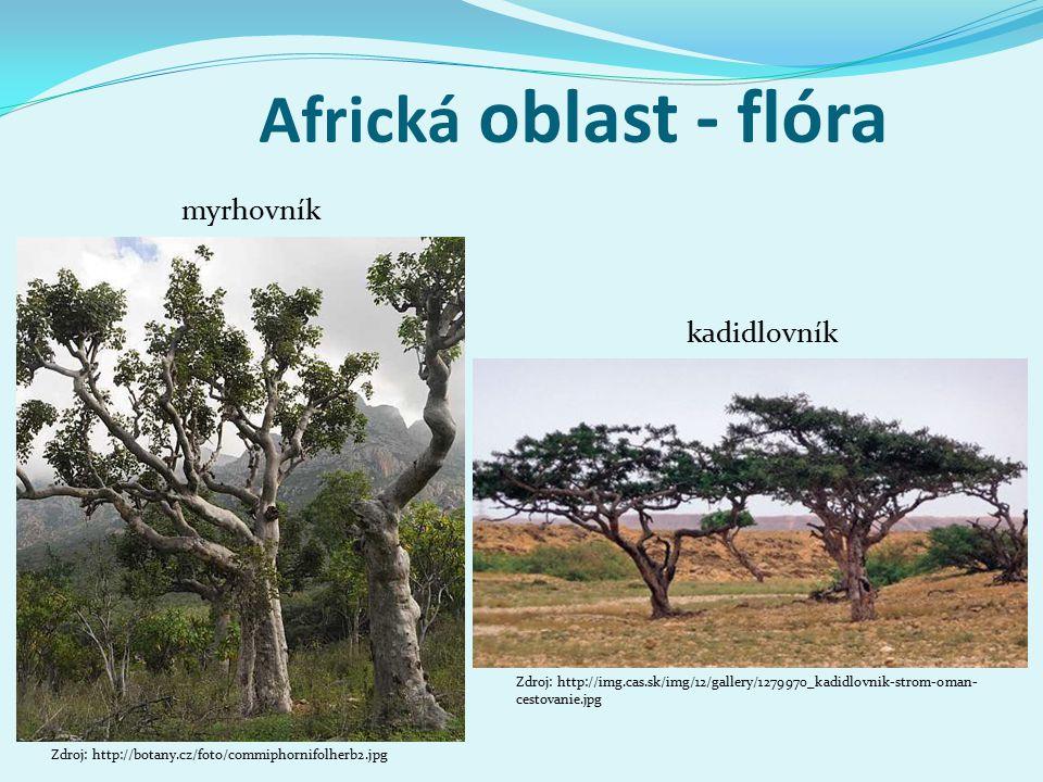 Africká oblast - flóra kadidlovník Zdroj: http://img.cas.sk/img/12/gallery/1279970_kadidlovnik-strom-oman- cestovanie.jpg Zdroj: http://botany.cz/foto