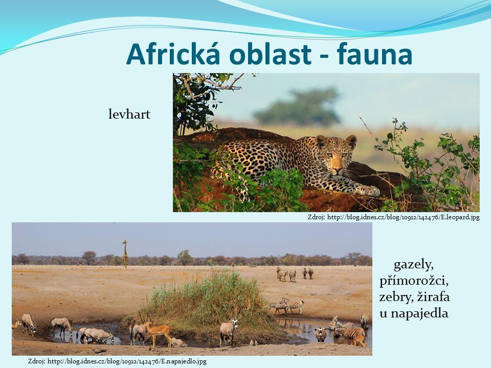 Africká oblast - fauna levhart gazely, přímorožci, zebry, žirafa u napajedla Zdroj: http://blog.idnes.cz/blog/10912/142476/E.napajedlo.jpg Zdroj: http