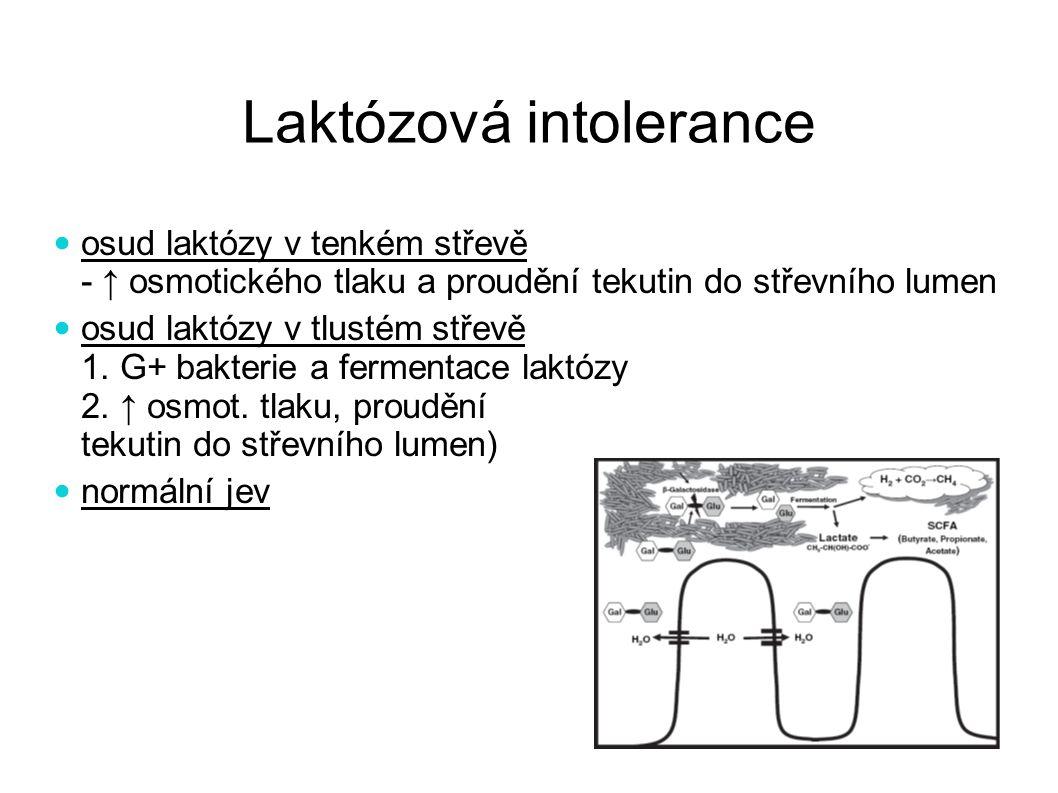 Laktózová intolerance osud laktózy v tenkém střevě - ↑ osmotického tlaku a proudění tekutin do střevního lumen osud laktózy v tlustém střevě 1. G+ bak