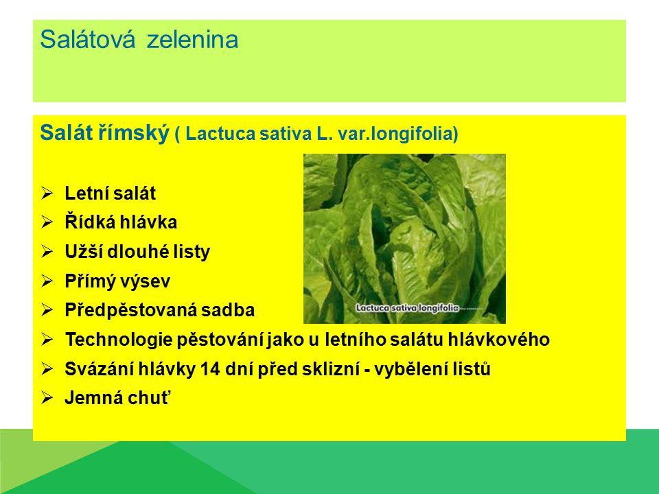 Salátová zelenina Salát římský ( Lactuca sativa L. var.longifolia)  Letní salát  Řídká hlávka  Užší dlouhé listy  Přímý výsev  Předpěstovaná sadb