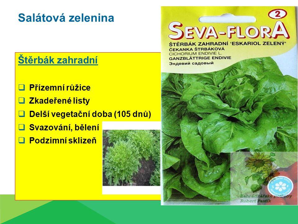 Salátová zelenina Štěrbák zahradní  Přízemní růžice  Zkadeřené listy  Delší vegetační doba (105 dnů)  Svazování, bělení  Podzimní sklizeň