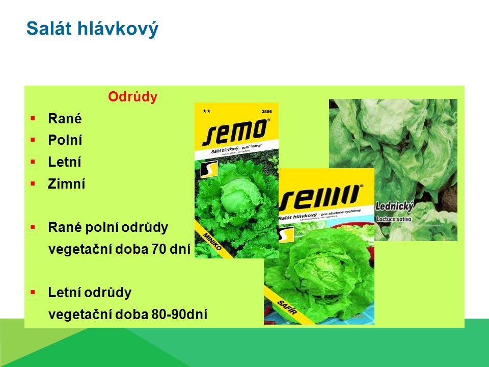 Salát hlávkový Odrůdy  Rané  Polní  Letní  Zimní  Rané polní odrůdy vegetační doba 70 dní  Letní odrůdy vegetační doba 80-90dní