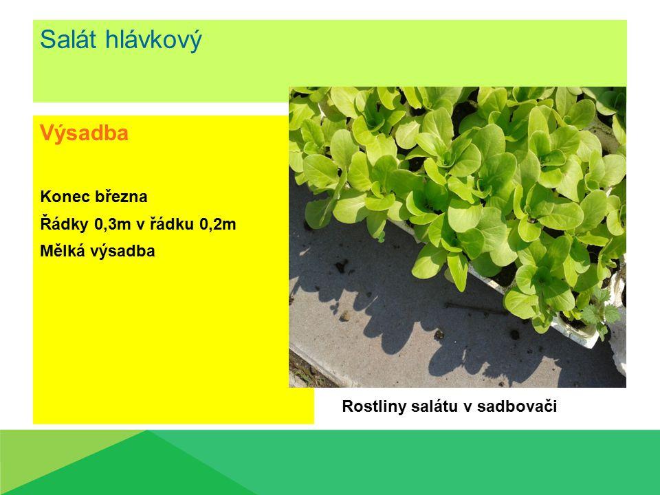 Salát hlávkový Výsadba Konec března Řádky 0,3m v řádku 0,2m Mělká výsadba Rostliny salátu v sadbovači