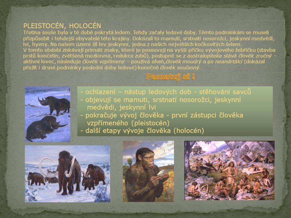 PALEOGÉN,NEOGÉN Po rozsáhlém vymírání koncem druhohor, začali do uvolněných prostor pronikat noví tvorové, zejména savci, kteří se rychle vyvíjeli.